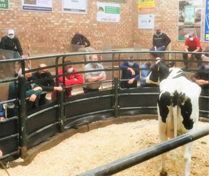 The trade for milkers has certainly surpassed all expectations over the last few months
