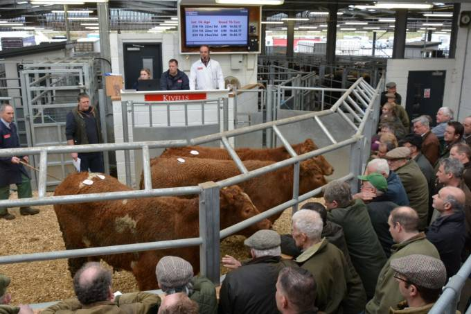 Cattle sold through livestock markets in England and Wales stood at 1,022,765, over 5,000 up on 2018 numbers.