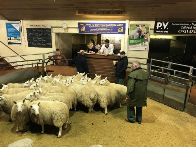Just shy of 10 million sheep were sold through livestock markets in England and Wales in 2019.